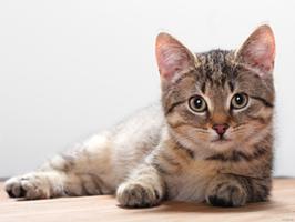 een gezonde kat is een gelukkige kat