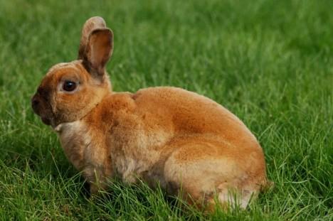een konijn moet altijd een schoon achterwerk hebben