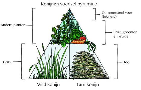 de voedselpyramide, veel hooi en groenvoer, een eetlepel biks per kilo konijn